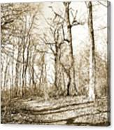 Path In A Forest Canvas Print