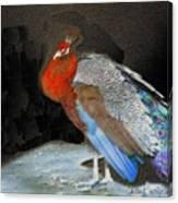 Peacock II Canvas Print
