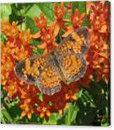 Pearly Crescentspot Butterfly Canvas Print