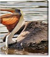Pelican Catching A Fish Canvas Print