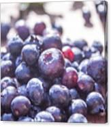 Picking Huckleberries Canvas Print