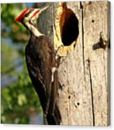 Pileated #26 Canvas Print