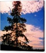 Pine Tree By Peck Lake 4 Canvas Print