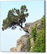 Pine Tree On A Rock Canvas Print