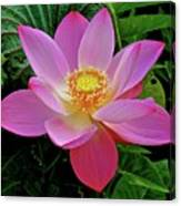Pink Blooming Lotus Canvas Print