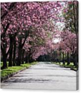 Pink Blooming Trees Canvas Print