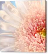Pink Daisy  Canvas Print