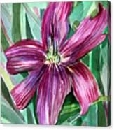 Pink Day Lily Canvas Print