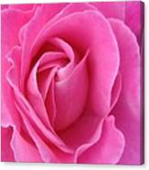 Pink Of Rose Canvas Print