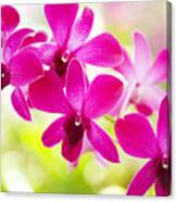 Pink Orchid Lei Canvas Print