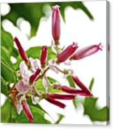 Pink Tropical Flower In Huntington Botanical Garden In San Marino-california Canvas Print
