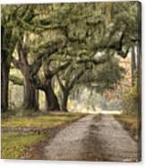 Plantation Drive Live Oaks  Canvas Print