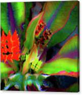 Plants And Flowers In Hawaii Canvas Print