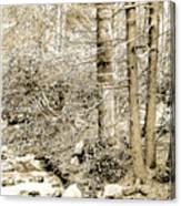 Pocono Mountain Stream, Pennsylvania, Digital Art Canvas Print
