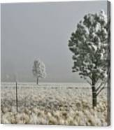 Pogonip Frosty Morning Canvas Print