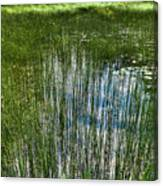 Pond Grasses Canvas Print