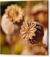 Poopy Seed Pod... Canvas Print