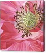 Poppy Canvas Print