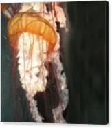 Portuguese Man-of-war Canvas Print
