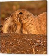 Prairie Dog Tender Sunset Kiss Canvas Print