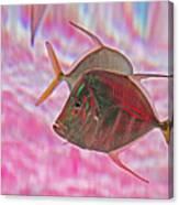 Pretty Fishy, Fish, 6, Multi-color, Pink Backgroun7 Canvas Print