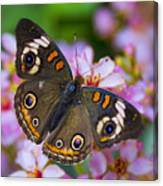 Happy Little Butterfly  Canvas Print