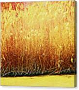 Pueblo Downtown River Grasses 4 Canvas Print