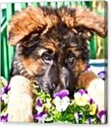 Puppy Oskar Canvas Print