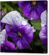 Rain Drops In The Morning Canvas Print