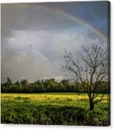 Rainbow Fields Canvas Print