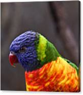 Rainbow Lorikeet Canvas Print