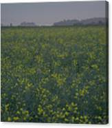 Rapeseed Dawn Canvas Print