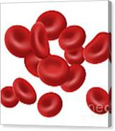 Red Blood Cells, Illustration Canvas Print
