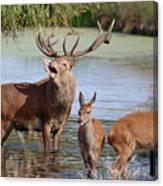 Red Deer In Bushy Park London Canvas Print