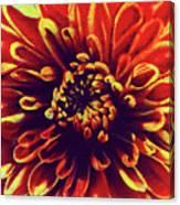 Red Flower 92 Canvas Print