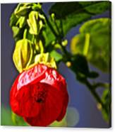 Scarlet Mallow At Pilgrim Place In Claremont-california- Canvas Print
