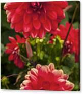 Red Flower Close Up Canvas Print