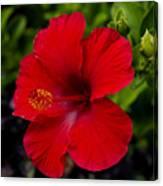 Red Hibiscus - Kauai Canvas Print