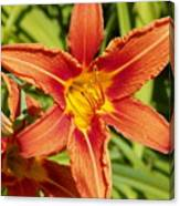 Red Lily Canvas Print