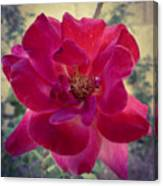 Red Rose Canvas Print