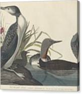 Red-throated Diver Canvas Print