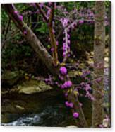 Redbud And River Canvas Print