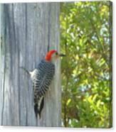 Redheaded Woodpecker Canvas Print
