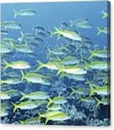 Reef Scene Canvas Print