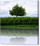 Reflecting Tree Canvas Print