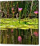Reflective Wild Water Lilies Canvas Print