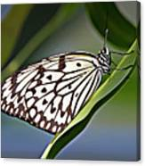 Rice Paper Butterfly 8 Canvas Print