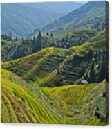 Rice Terraces In Guilin, China  Canvas Print
