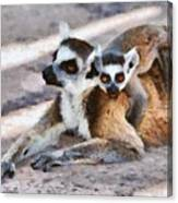 Ring Tailed Lemur With Baby Canvas Print