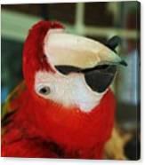 Ringo The Ruby Macaw Canvas Print